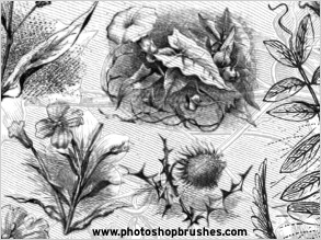 Floral Illustration Brushes